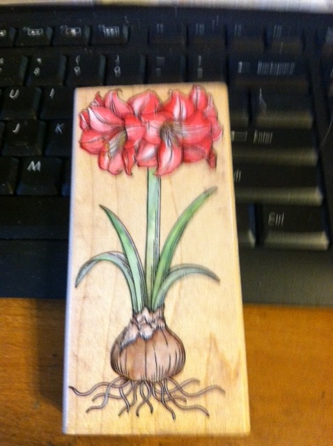 Amaryllis - Not SU -- Approximately 2X5 inches